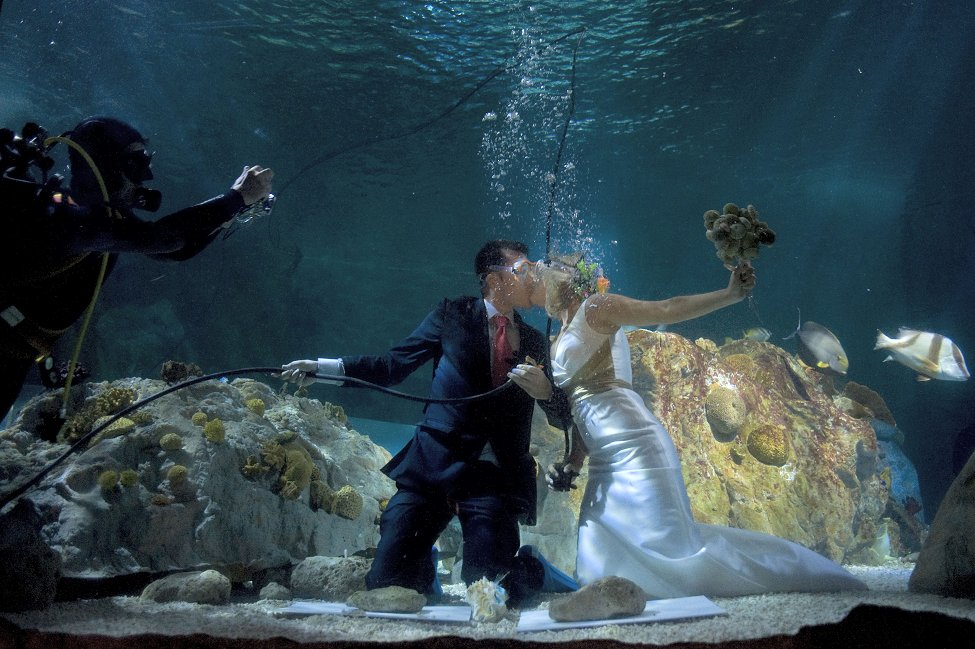 Underwater Wedding And Legal Wedding Persun Cc Official Blog